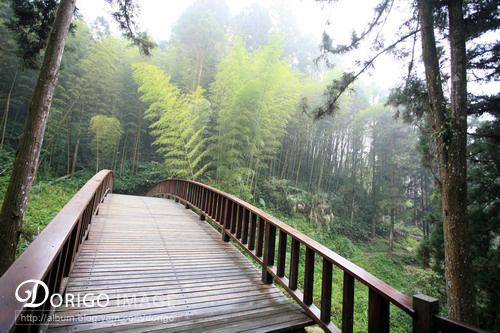 奮起湖登山步道(阿里山全記錄)