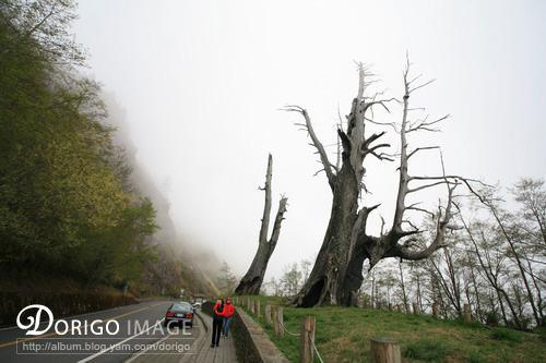 塔塔加夫妻樹(阿里山全記錄)