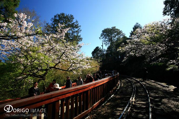 沼平車站(阿里山全記錄)