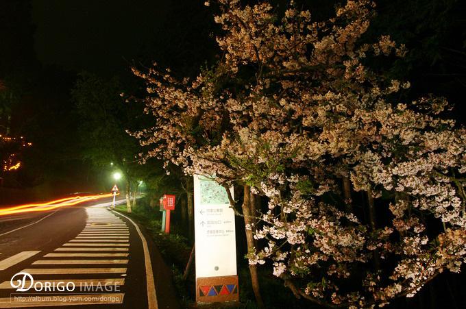阿里山夜遊(阿里山全記錄)